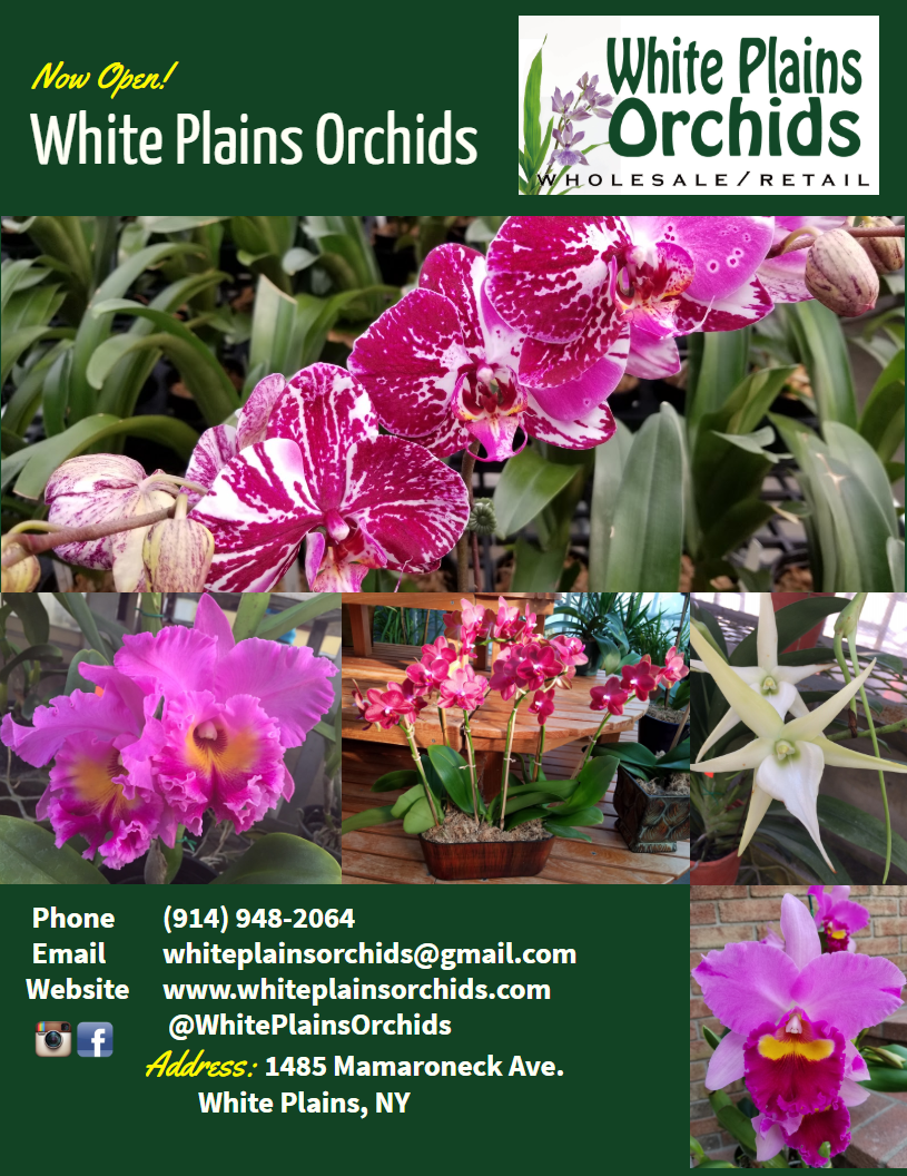 White Plains Orchids Wholesale And Retail
