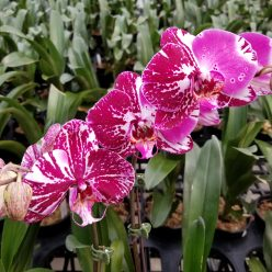 White Plains Orchids