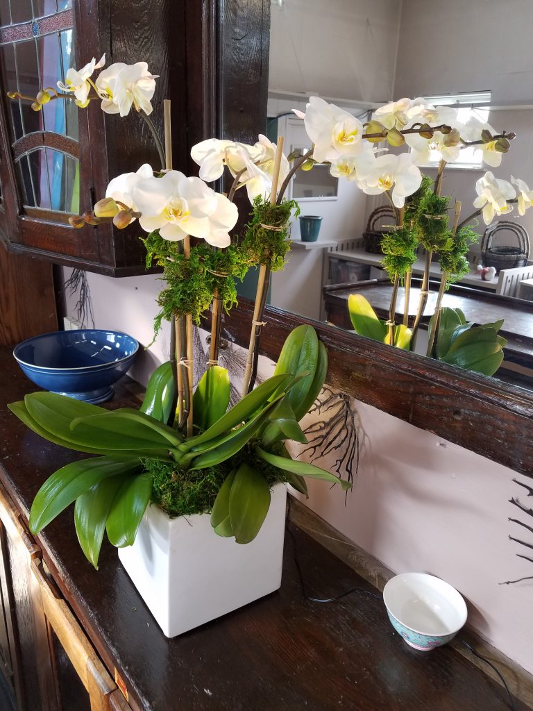 Gallery White Plains Orchids