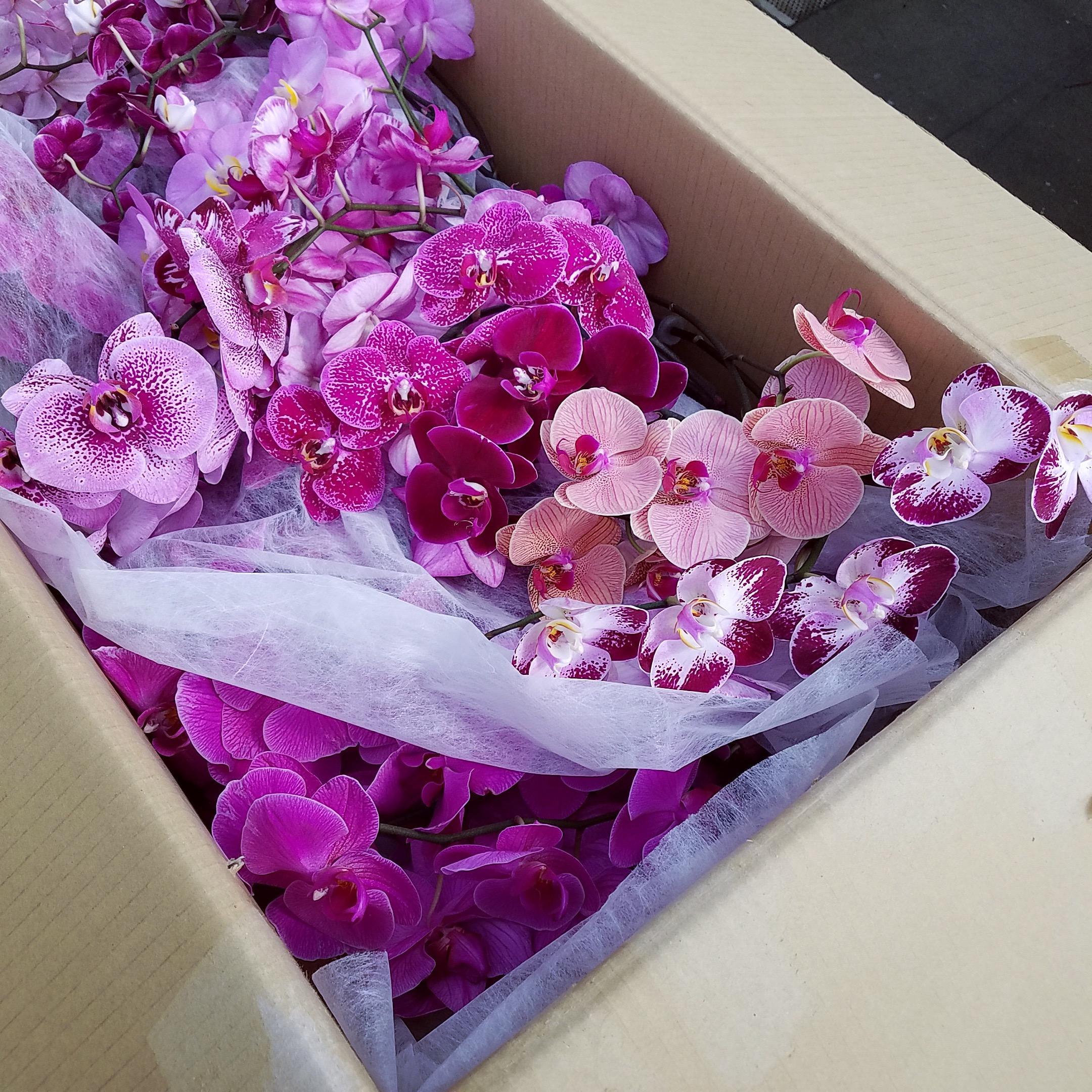 Summer Sale On Cut Flowers White Plains Orchids